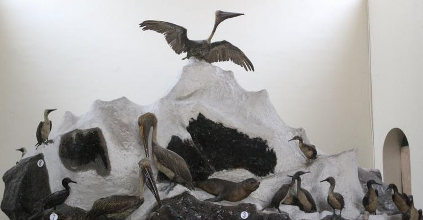 UNMSM: Egresada de la Universidad San Marcos propone digitalizar colección del Museo de Historia Natural