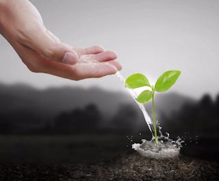 Cleve Backester y el efecto de los pensamientos sobre las plantas