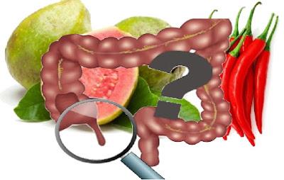 Beberapa mitos yang beredar seperti makan jambu biji atau cabai bersama bijinya Bisa menjadi faktor penyebab usus buntu. Benarkah ? Ketahui jawabannya disini !