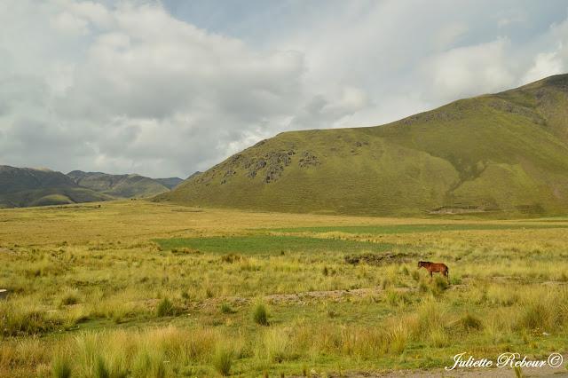 Voyage au Pérou, altiplano