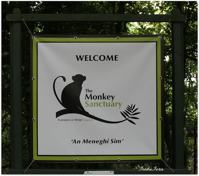 The Monkey Sanctuary