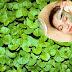 Cách trị nám da sau sinh bằng rau má được nhiều áp dụng