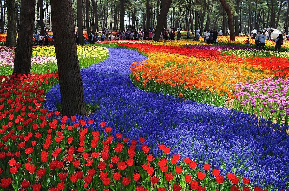 Lugar Mágico Increíble, Hitachi Seaside Park, Japón 4