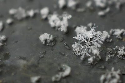 https://www.etsy.com/listing/171823006/winter-in-detail-print-snowflake-photo?ref=favs_view_1