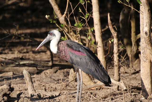 Aves en Santa Lucia
