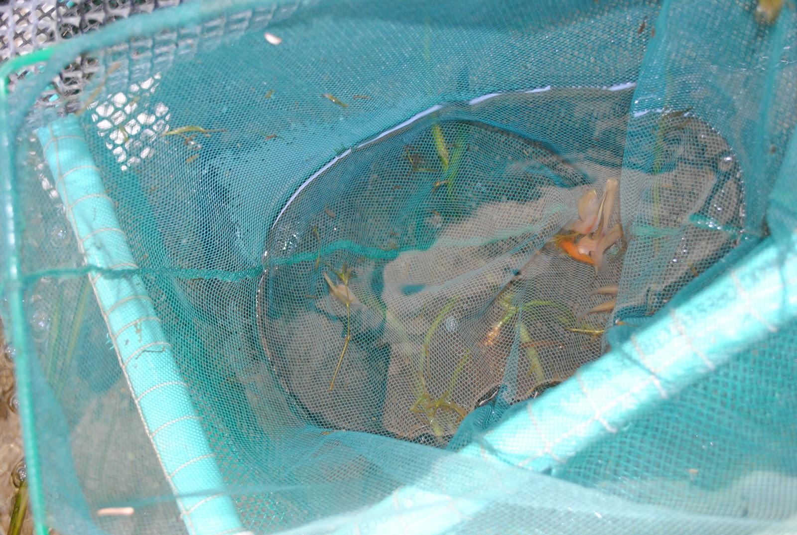 Centro acu cola y agroindustrial de gaira regional for Reproduccion de peces ornamentales