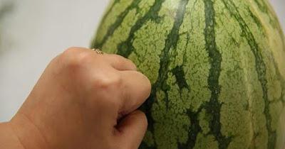 البطيخ