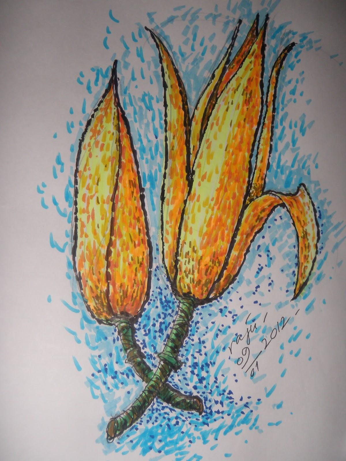 Sketsa Gambar Bunga Cempaka Gambar Bunga