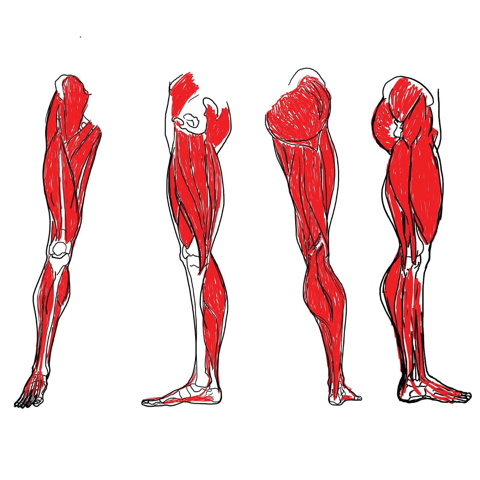 Joe S Art Splosion Blog Legs And Muscles