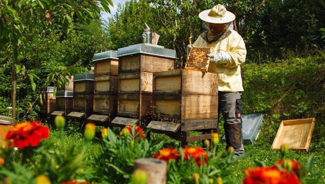 Κέντρο Μελισσοκομίας θα δημιουργηθεί στην Τρίπολη