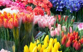 CMP (Cap. 14) Les Flors del meu jardi