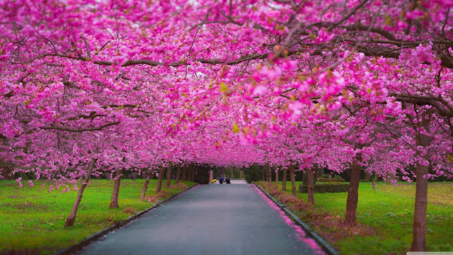 Romantic Spring Wallpapers