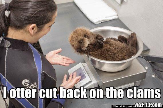 Funny Otter Cut Back Scales Meme Joke Picture