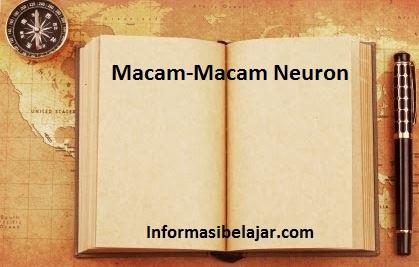 Macam-Macam Neuron dan Fungsinya