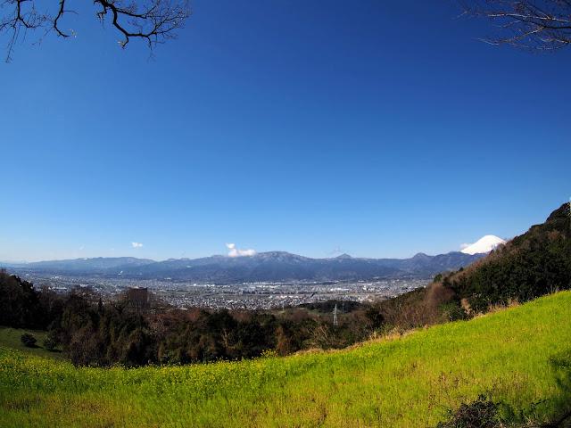 大井町 篠窪 富士見塚 菜の花 富士山