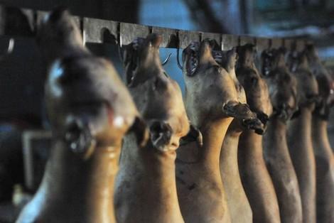 توقيف 7 أشخاص متورطين في ذبح و ترويج لحوم الكلاب بالمحمدية !