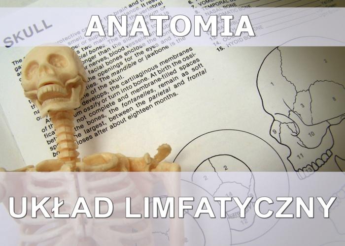 uklad-limfatyczny