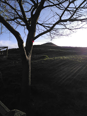 Tree with offering ribbon at Glastonbury Tor