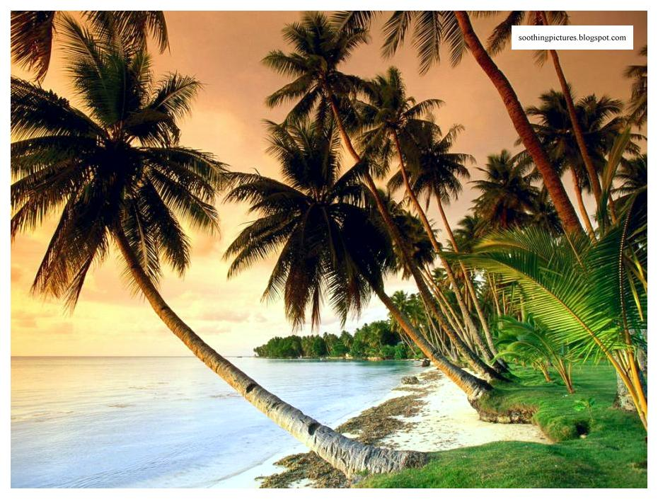peaceful sea coconut trees