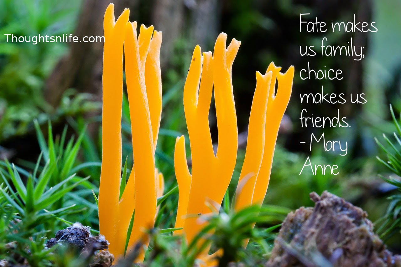 Thoughtsnlife.com: Fate makes us family; choice makes us friends. - Mary Anne Radmacher