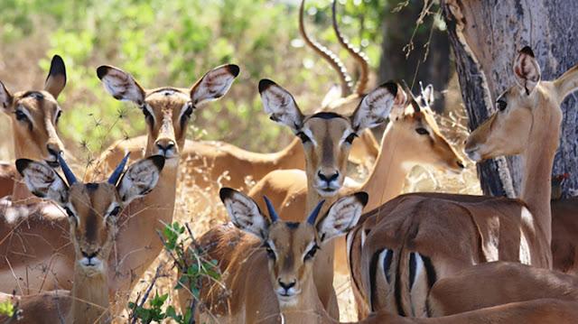 الحيوانات في المحميات التونسية