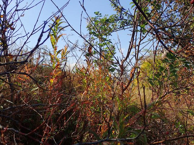 Roślinnie-jesiennie