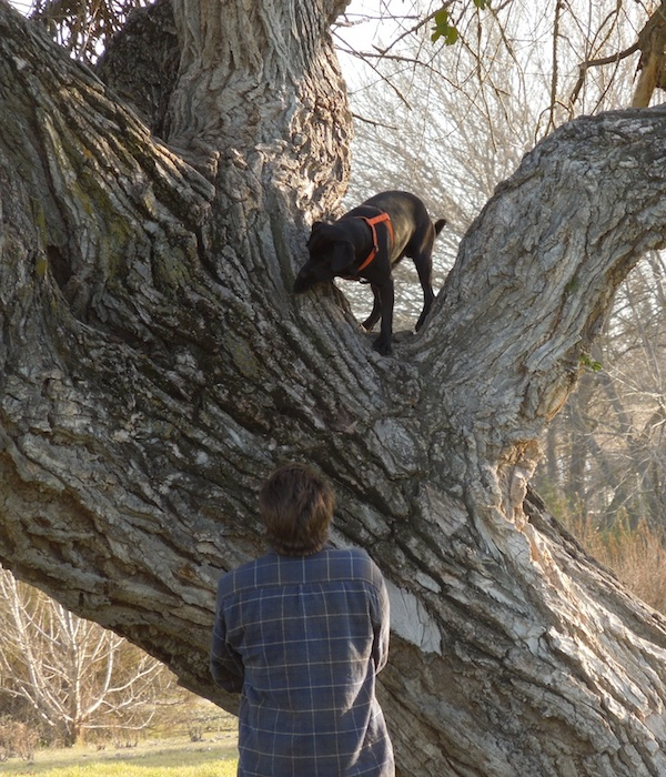 Dog in Tree, © B. Radisavljevic