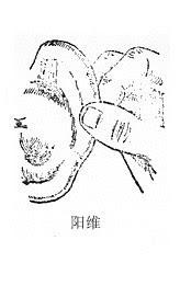 陽維穴位   陽維穴痛位置 - 穴道按摩經絡圖解   Source:zhongyibaike.com