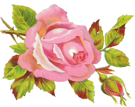 http://2.bp.blogspot.com/-4nC6hlGeJ-k/TmrAhuHjBNI/AAAAAAAABHw/3Poe5MsIaHQ/s640/Rose.jpg