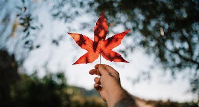 Proverbes et Dictons du Canada