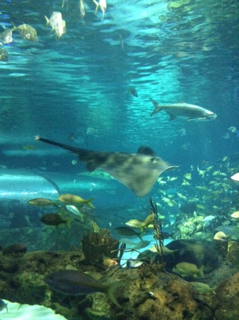 Visit Ripley's Aquarium of Canada ~ #Review