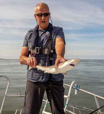 Photo of the larger of the two tope Phil caught on this trip