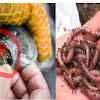 WASPADA BUND..!! Mulai Detik Jni Juga Berhenti Makan Ikan Nila/Tilapia Secepatnya Sebelum Terlambat, Karna Tak Baik Untuk Kesehatan.. Banyak Meng4ndung Penyakit Berbah4ya... Tolong Bantu Sebarkan.