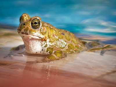 Water Animals Name Frog