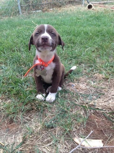 Anjing senyum