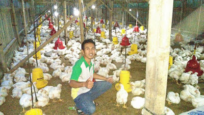 cara ternak ayam potong pemula