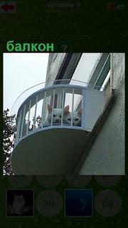на балконе дома за ограждением сидят две кошки