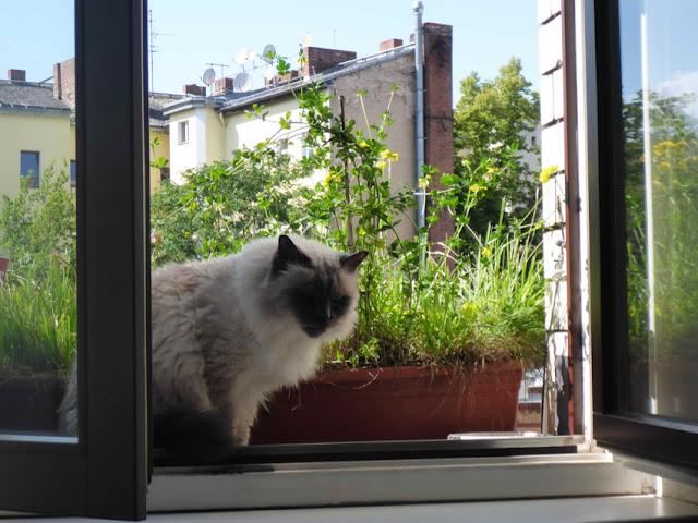 Fensterkatze vor Blumenkasten, Baumgrün und Häuserwänden