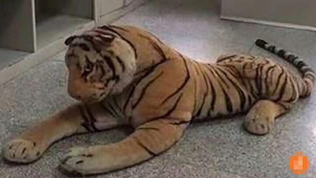 tigre_peluche_causa_panico_china