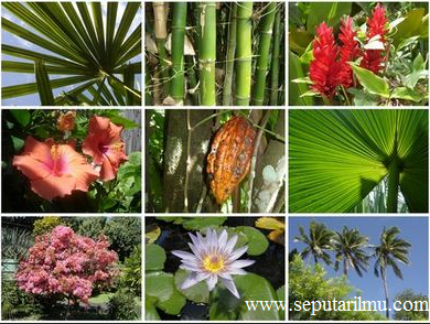Pengertian, Jenis-Jenis Flora, dan Persebaran Flora di Dunia Terlengkap