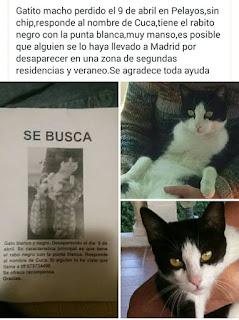 Mi amiga Mª Jesús ha perdido a su gatito por la zona de Pelayos y cree que  alguien 4b01866835c93