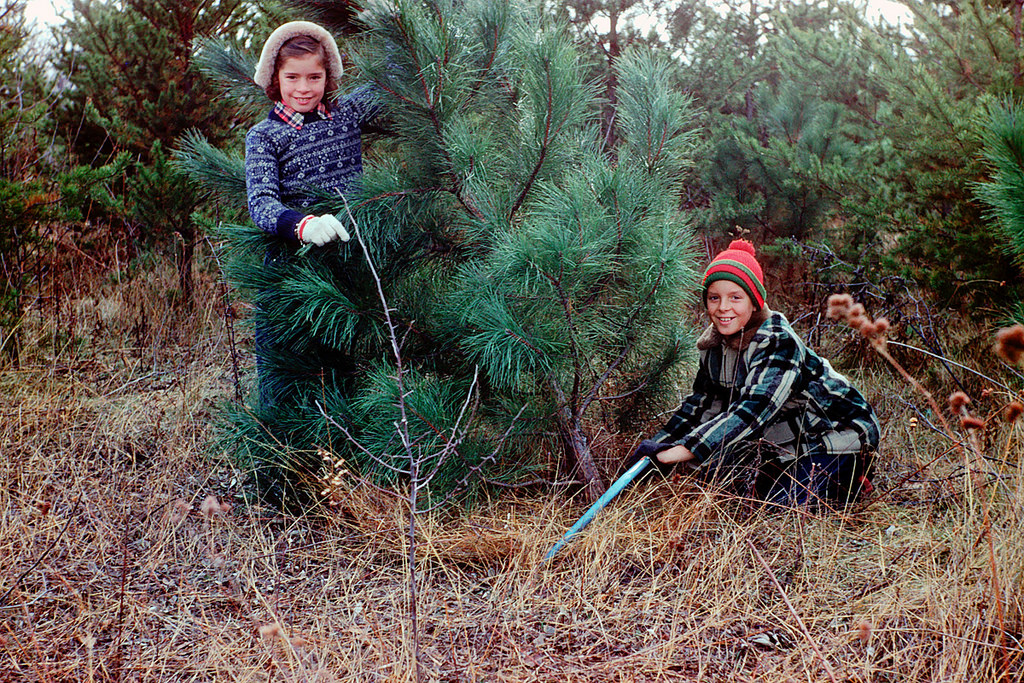 Vintage everyday cutting down christmas tree 1954