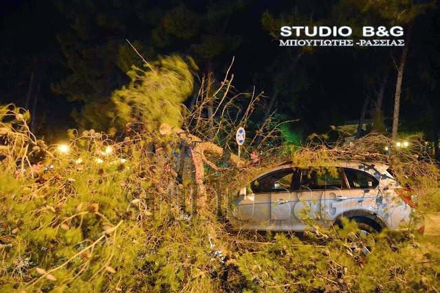 Απάντηση Μπαλάφα σε Ανδριανό για την ανάγκη αντιμετώπισης του κινδύνου ατυχημάτων από πτώση δέντρων