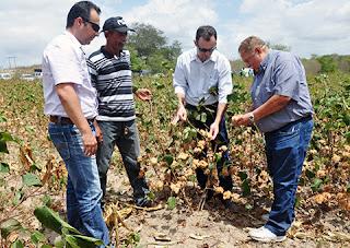 Governo da PB distribui sementes de algodão orgânico para agricultores familiares de Baraúna e Picuí