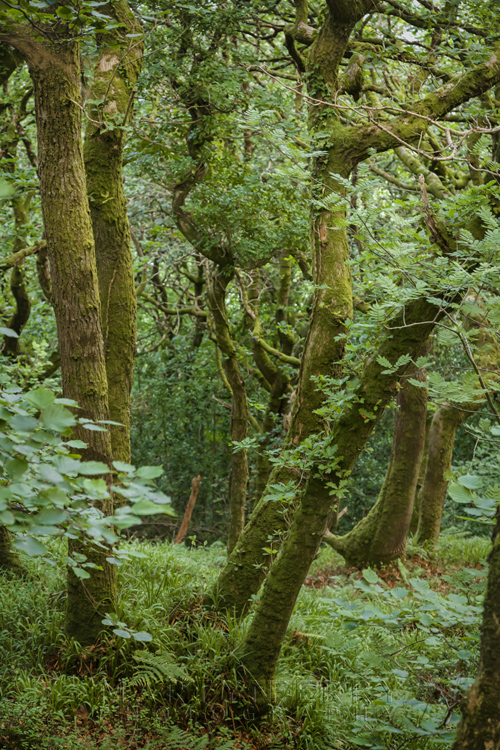 Culbone Wood in Exmoor National Park by Martyn Ferry Photography