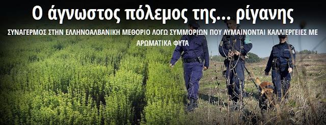 Ο άγνωστος πόλεμος της ρίγανης και των αρωματικών φυτών στην Ελληνοαλβανική μεθόριο