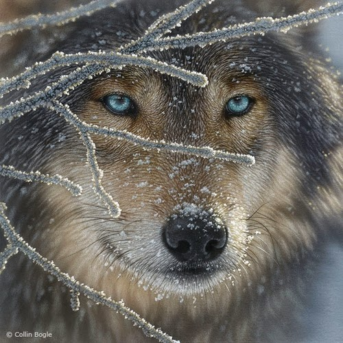 13-Wolf-Collin-Bogle-Animal-Wildlife-in-Art-www-designstack-co