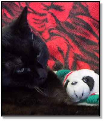 Katze und Panda