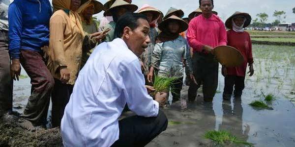 Turunkan Beras Impor Di Daerah Surplus, Kebijakan Pemerintah Jokowi Bunuh Petani Dalam Negeri