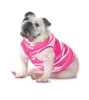 http://wishpromo.com/product/3902_Doggie_Skins_Baby_Rib_Tank_383190